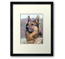 War Dog Framed Print