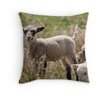 What a cutie!! Domestic Sheep Throw Pillow