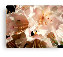 Perfection at its finest Canvas Print