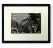 Howling Wolf Touch My Soul Framed Print