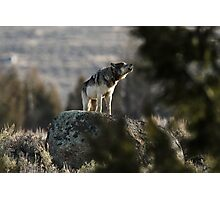Howling Wolf Touch My Soul Photographic Print