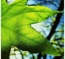 Photo Synthesized  by iguanadongreen