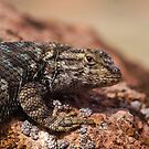 Owens Valley Reptiles by Chris Morrison