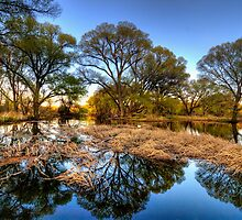 Surrounding Trees by Bob Larson
