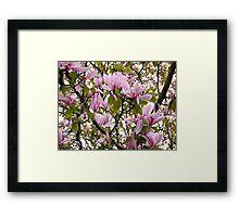 Magnolia (Tulip Tree) Framed Print