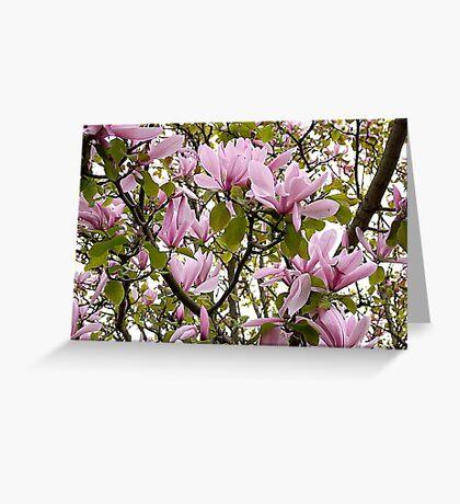Magnolia (Tulip Tree) Greeting Card