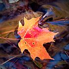 Autumn Leaf by shutterbugg73