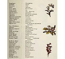 Language of Flowers Kate Greenaway 1884 0043 Descriptions of Specific Flower Significations Photographic Print