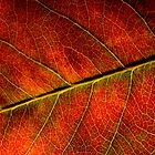 Autumn Leaf by Ian Sanders