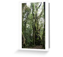 Ancient Tree - Springbrook National Park, Queensland, Australia Greeting Card