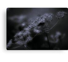 Dragonfly, perching Canvas Print