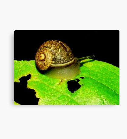 Snail Munch Canvas Print