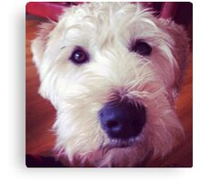 Harry, Wheaten Terrier #2 Canvas Print