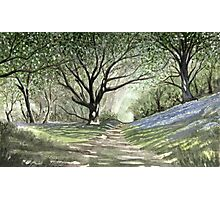 """Where Will It Take Us?"" - Bluebell Wood, Porlock Hill, Somerset Photographic Print"