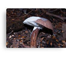 Two tone chocolate fungi Canvas Print