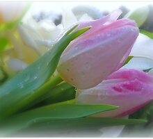 Pretty Tulips by Morag Bates