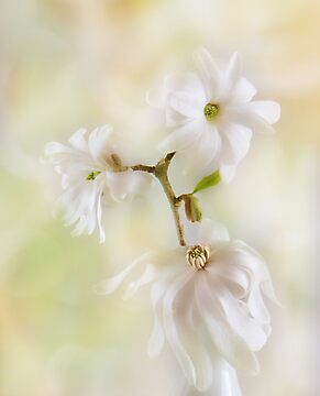 Nice In White Satin by John Poon