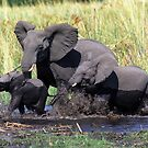 Family of elephants crossing water stream by leksele