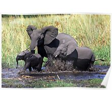 Family of elephants crossing water stream Poster