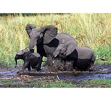 Family of elephants crossing water stream Photographic Print