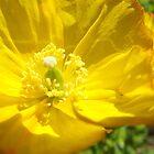 Yellow flower by VjayG