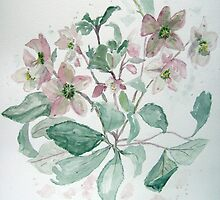 Hellebore by Timothy Smith