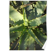 Aloe Aloe Poster