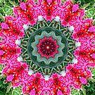 Fairys circle. by Elaine Game