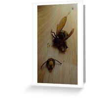 Terrible Hornet Crash Greeting Card