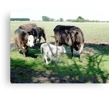 Friends come to say Moo to Casper Canvas Print