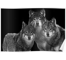 Sheep in wolf clothes  Poster
