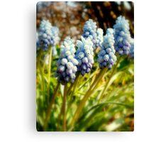 Bluebells - Altamont gardens Canvas Print