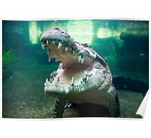 Rex, The 5 Metre Monster Crocodile Poster