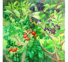 ELDERBERRIES and ROSE HIPS Photographic Print