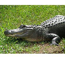 'Gator Grin. Photographic Print