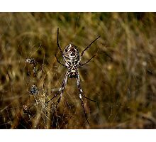 Crazy Weaver Photographic Print
