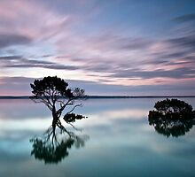Mangrove Magic by Alistair Wilson