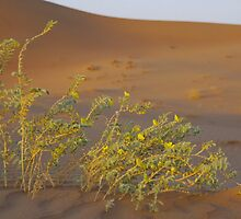 And in the lifeless desert - life... by Peter Doré