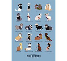 Cat World Leaders Photographic Print