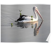 A sole pelican on the mudflats, Cairns Poster