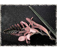 Singapore Orchid Photographic Print