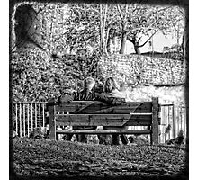 lovely afternoon Photographic Print