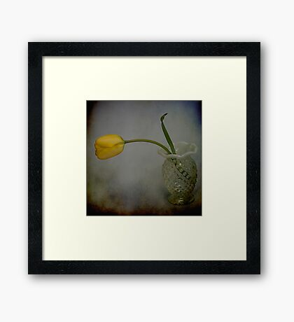 yellow tulip in texture Framed Print