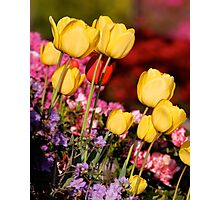 Golden Cups for the Garden Photographic Print