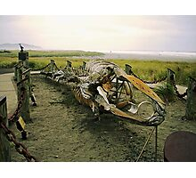 Gray (Right) Whale Skeleton Photographic Print