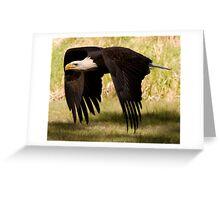 Bald Eagle - powerful down-stroke Greeting Card