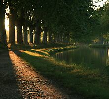 Late afternoon sun canal du midi France by Paul Pasco