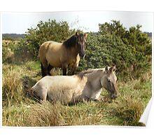 """ Wild Horses "" Poster"