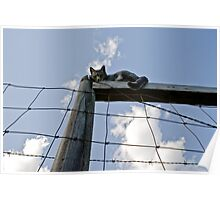 Cat With A View Poster