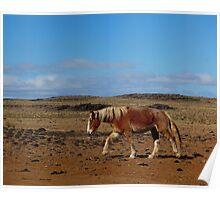 BIG HORSE ! Poster